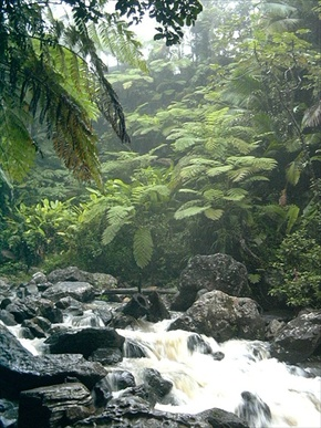El Yunque, Rainforest