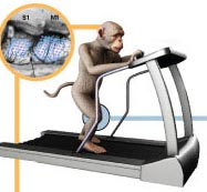 Monkey Treadmill